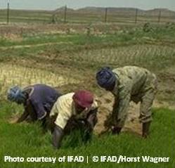 Ifad_mauritania_10107_o34s_sq_credit